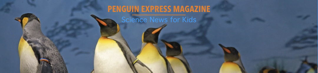 Penguin2.001
