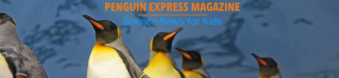 Penguin Express Magazine